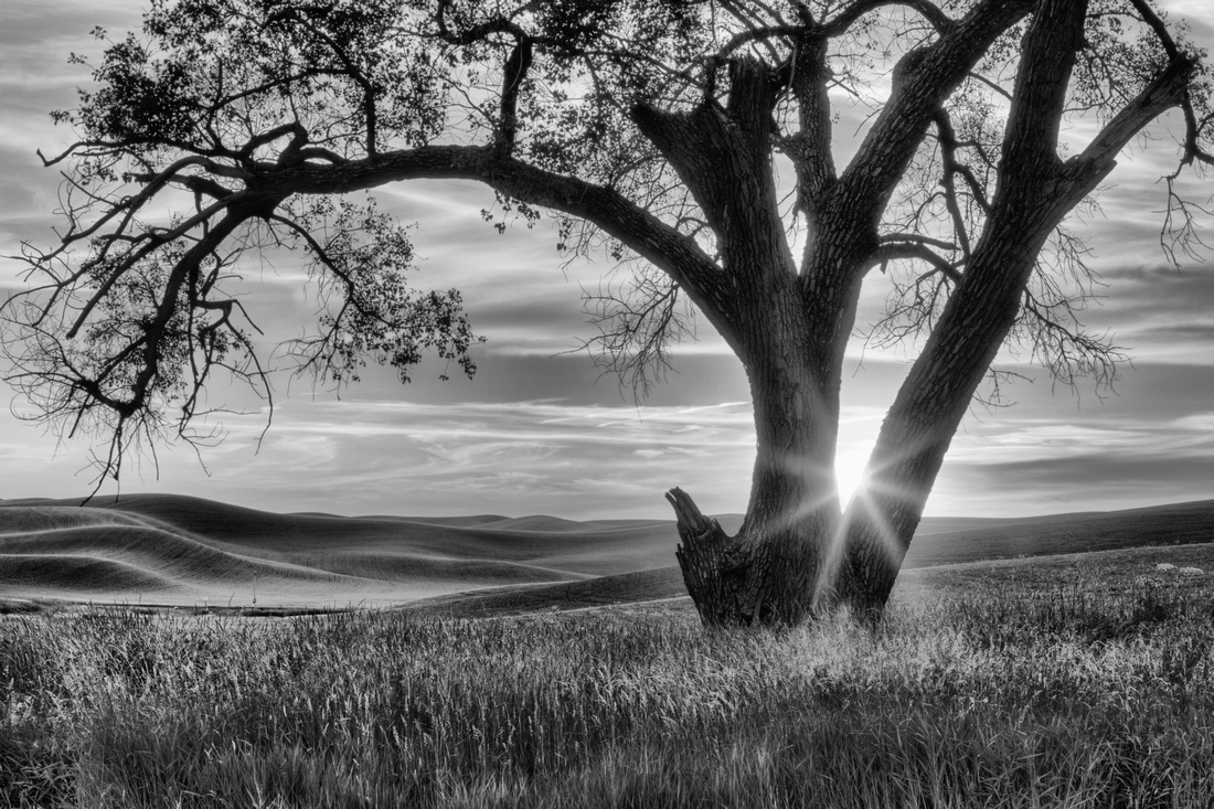 Palouse Sentinel - Black and White