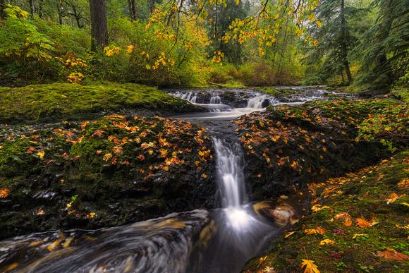 Autumn Euphoria