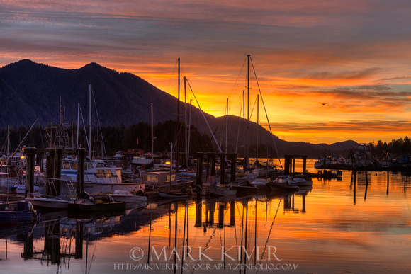 Tofino Docks Sunrise - A Tribute